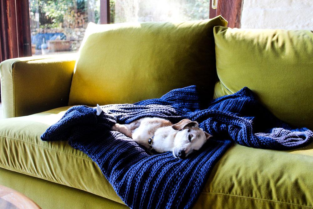 Kangaroo Valley Dog Friendly