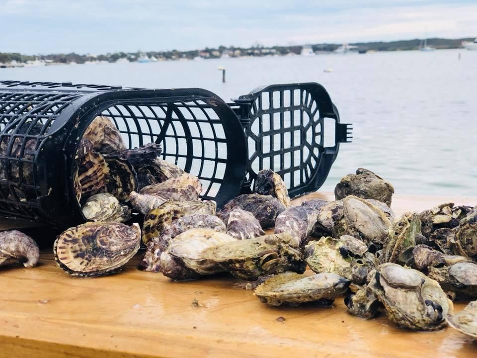 Oyster_Farm_Tour