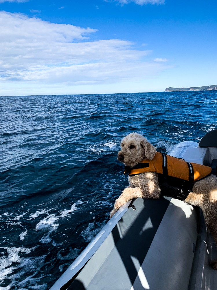 Whale_Watching_Boat_Groodle_Boat_Dog