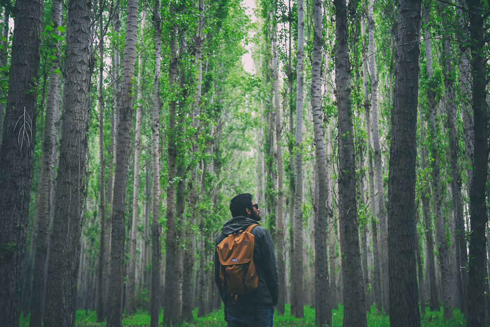 man-in-forest