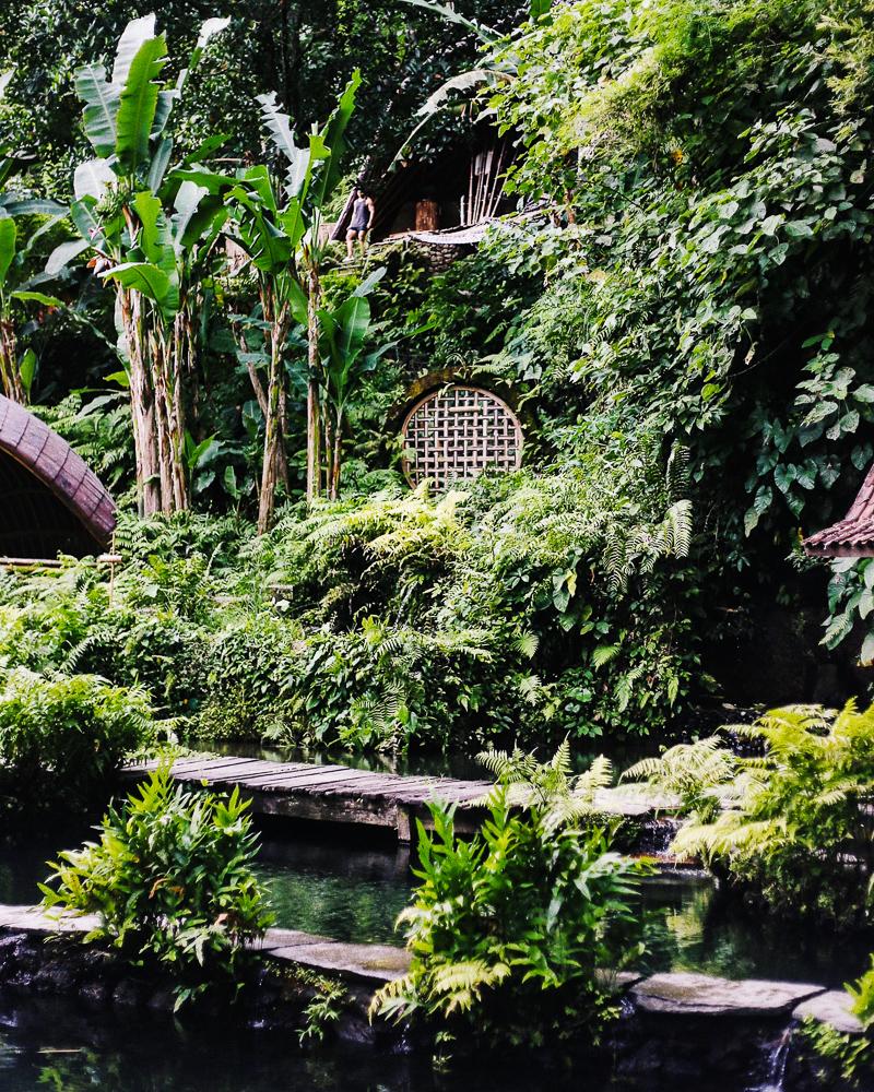 quiet-green-jungle-oasis