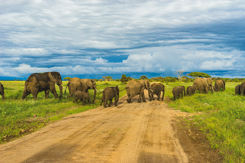 herd-of-elephants-with-blue-sky
