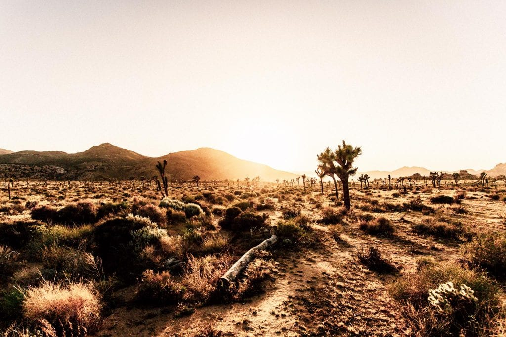 barren-land