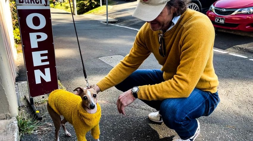 Man and dog both in yellow sweaters